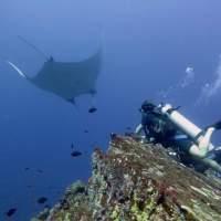 Thaïlande - Plongée aux îles Similan avec la raie Manta !