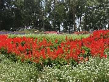 chiang mai - palace bhubing (1)
