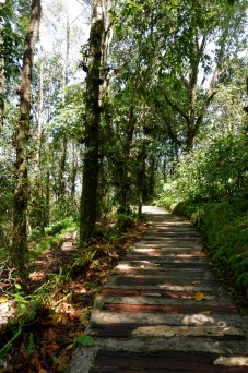 chiang rai - mae fah luang arboretum - doi tung (2)