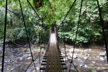 jungle de khao sok - parc national (2)