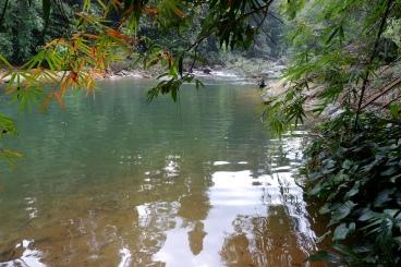 jungle de khao sok - parc national (3)
