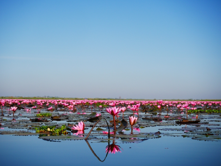 lac de lotus rose - udon thani (4)
