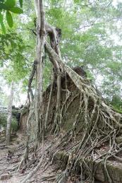 preah kahn - angkor wat - siem reap (6)