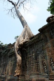 preah kahn - angkor wat - siem reap (7)