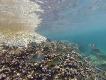 thailande - koh tao - chumphong - plongee - diving - lectourebangkok (2)