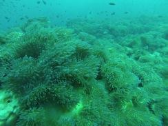 thailande - koh tao - chumphong - plongee - diving - lectourebangkok (4)