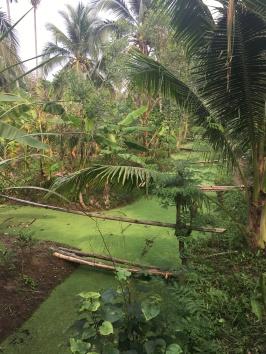 bang kachao - poumon vert de bangkok - lectourebangkok (2)