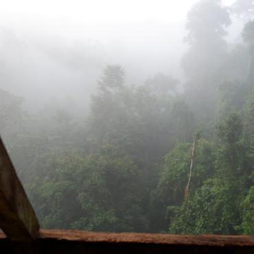 gibbon experience - aube - laos - elodithello (2)
