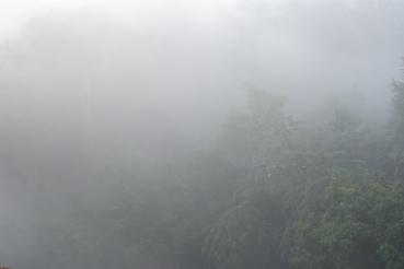gibbon experience - aube - laos - elodithello (3)