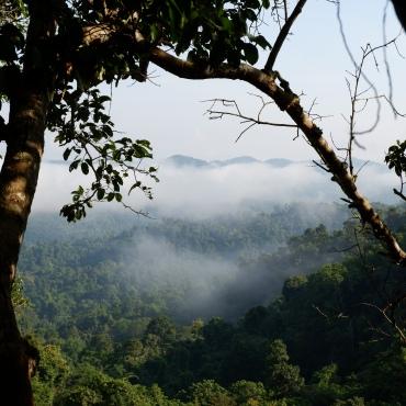 gibbon experience - aube - laos - elodithello (4)