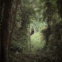 Laos - Gibbon Experience