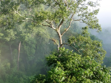 gibbon experience - laos - foret jungle - tyrolienne - elodithello (2)