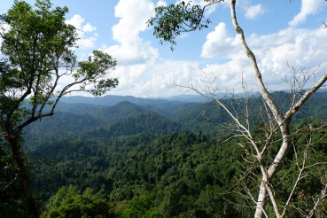 gibbon experience - laos - foret jungle - tyrolienne - elodithello (3)