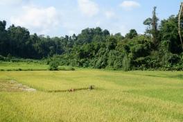 gibbon experience - laos - plaine - elodithello (2)