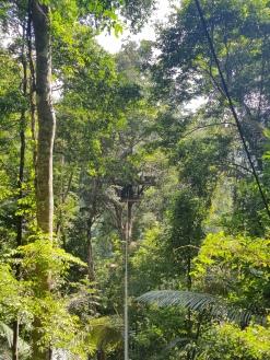 gibbon experience - laos - tree house - elodithello (2)
